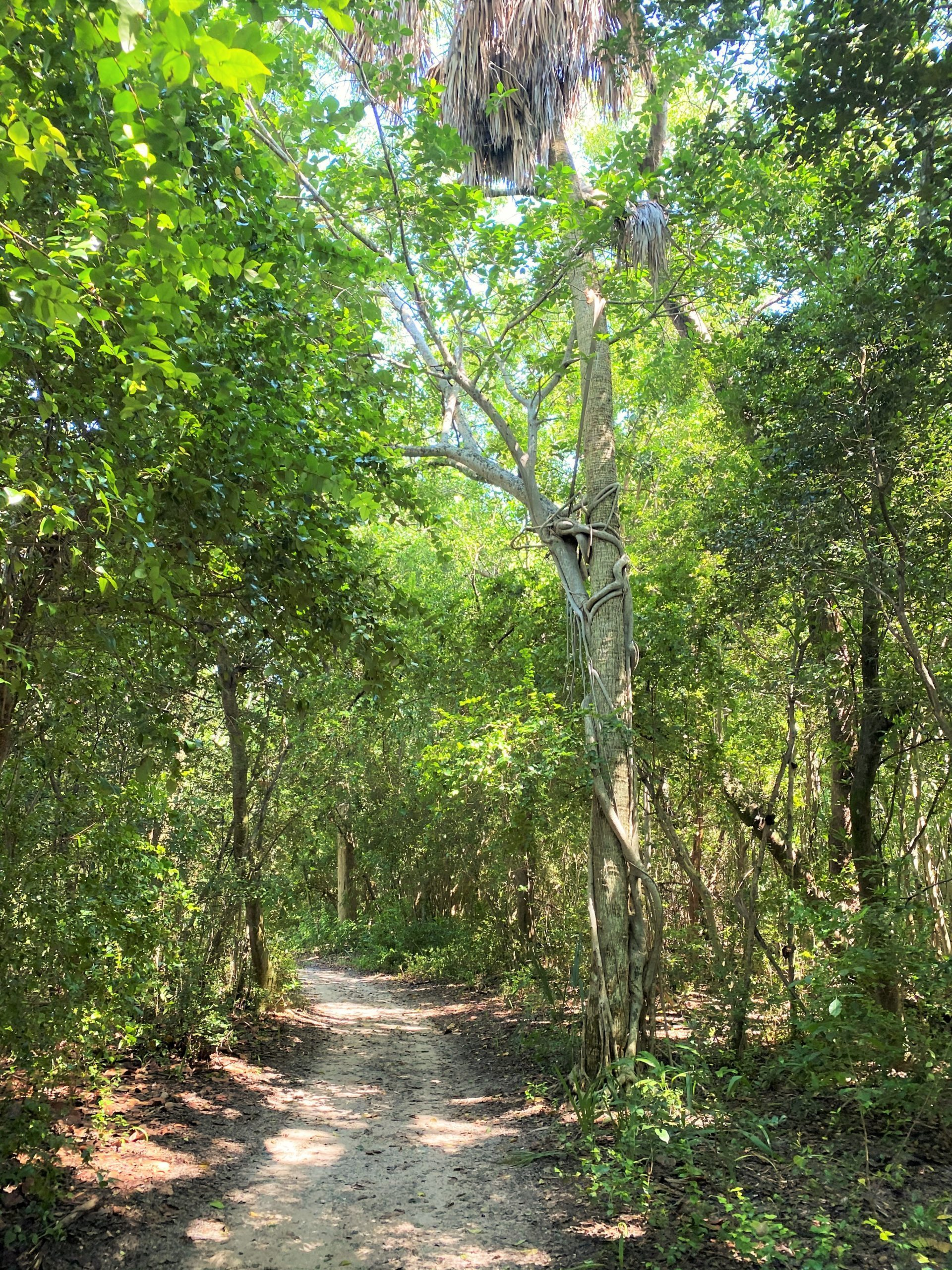ft lauderdale nature hikes
