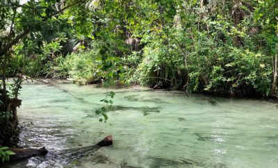 Florida's Adventures: Kayaking within the Springs